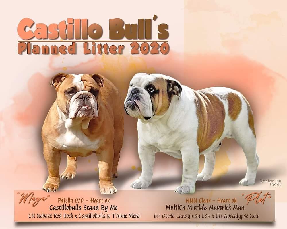 Castillo Bull's Planned Litter 2020
