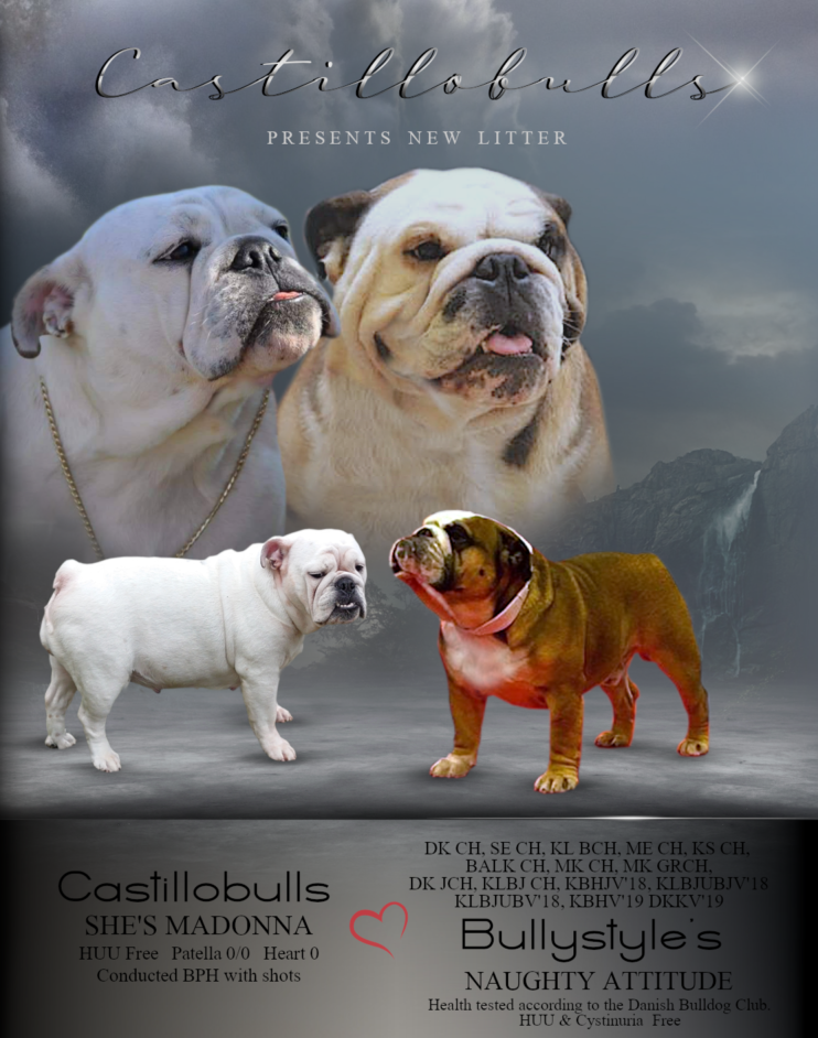 Male - Multi Ch Bullystyle´s Naughty Attitude and Female - Castillobulls She´s och Madonna