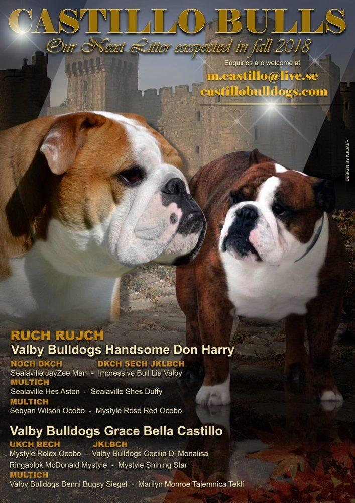Valby Bulldogs Handsome Don Harry och Valby Bulldogs Grace Bella Castillo
