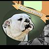 Castillobulls logo
