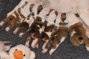 Puppies 13th of March 2020